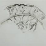 """""""Si peu de zones étanches"""", 2011( série) Encre de chine sur papier 30 x 40 cm"""