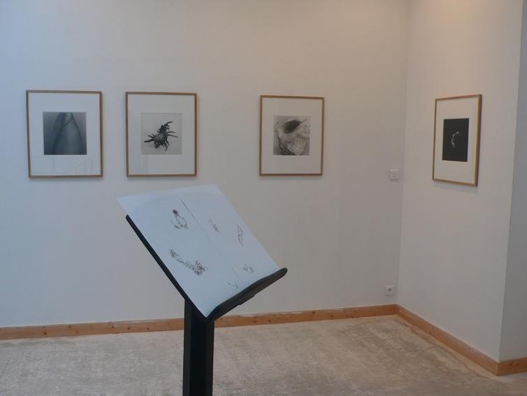 Sur le mur du fond, photographies d'Emmanuel Berry. Au 1er plan dessins de Frédéric Lormeau.